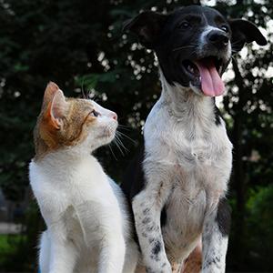Entretien et prévention tous animaux