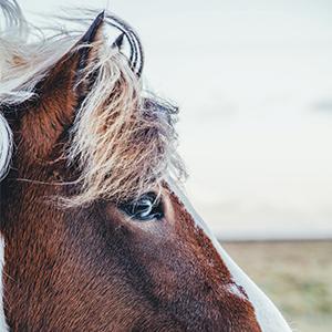 Beauté et vitalité du crin pour cheval