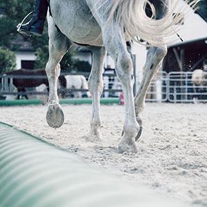 Soins dermatologiques pour cheval
